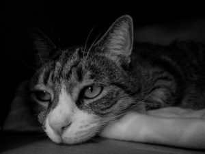 元気がない猫画像