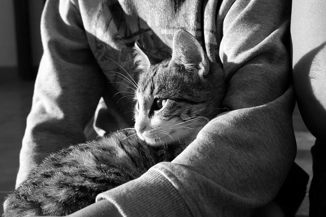 膝の上でくつろぐ猫の画像