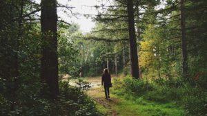 森の中を歩いている人の画像