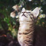 子猫の動きが可愛いすぎてなんだか泣きそうになった動画