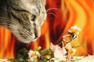 花の匂いを嗅ぐ猫の画像